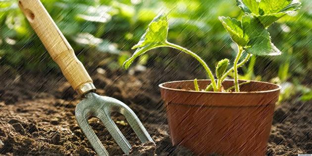 Berkebun Untuk Rumah Minimalis